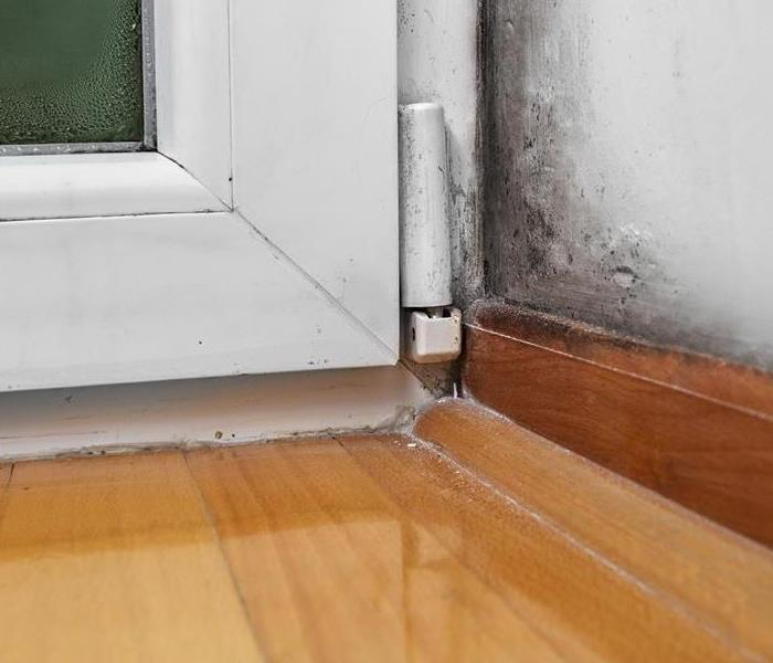 Mold Remediation Types of Household Mold
