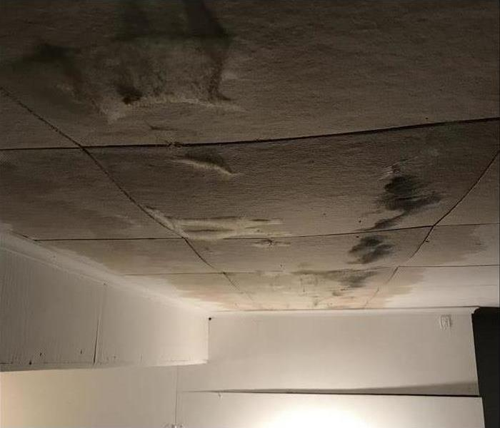 Mold growth in ceiling panels