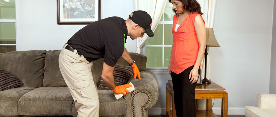 St Michael, MN carpet upholstery cleaning